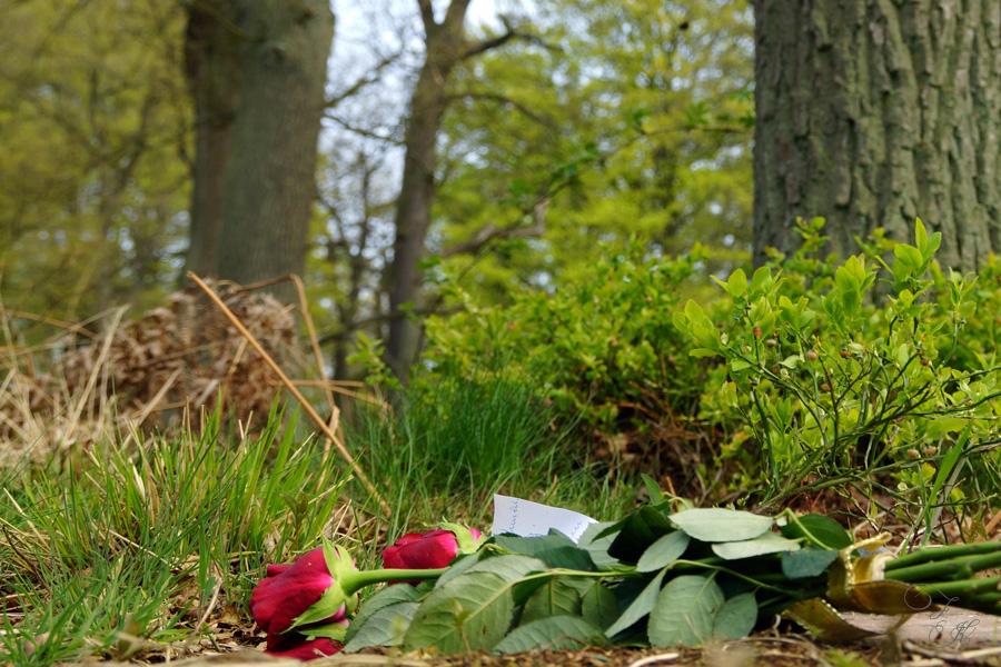 Friedwald – Новый вид захоронений